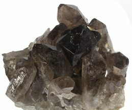 "Buy 4.5"" Dark Smoky Quartz Cluster - Large Crystals (Special Price) - #61498"
