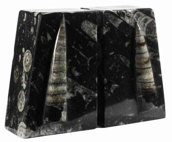 "4.6"" Polished Orthoceras Bookends - Morocco"