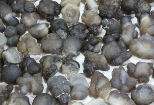 Chalcedony - Fossils For Sale - #61827
