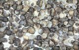 Natural Chalcedony Nodules Wholesale Lot - 122 Pieces - #61822-2