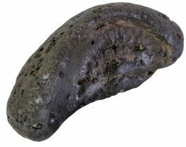 Whale (Unknown Species) - Fossils For Sale - #63546