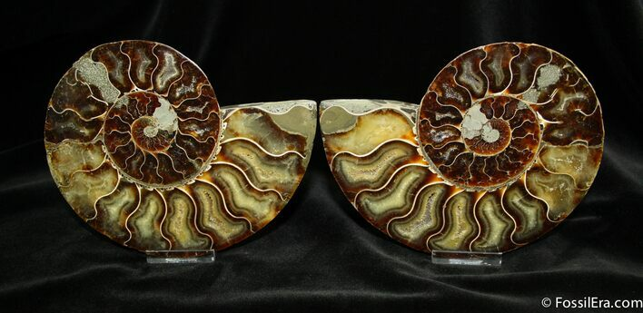 5.95 Inch Split Ammonite Pair From Madagascar