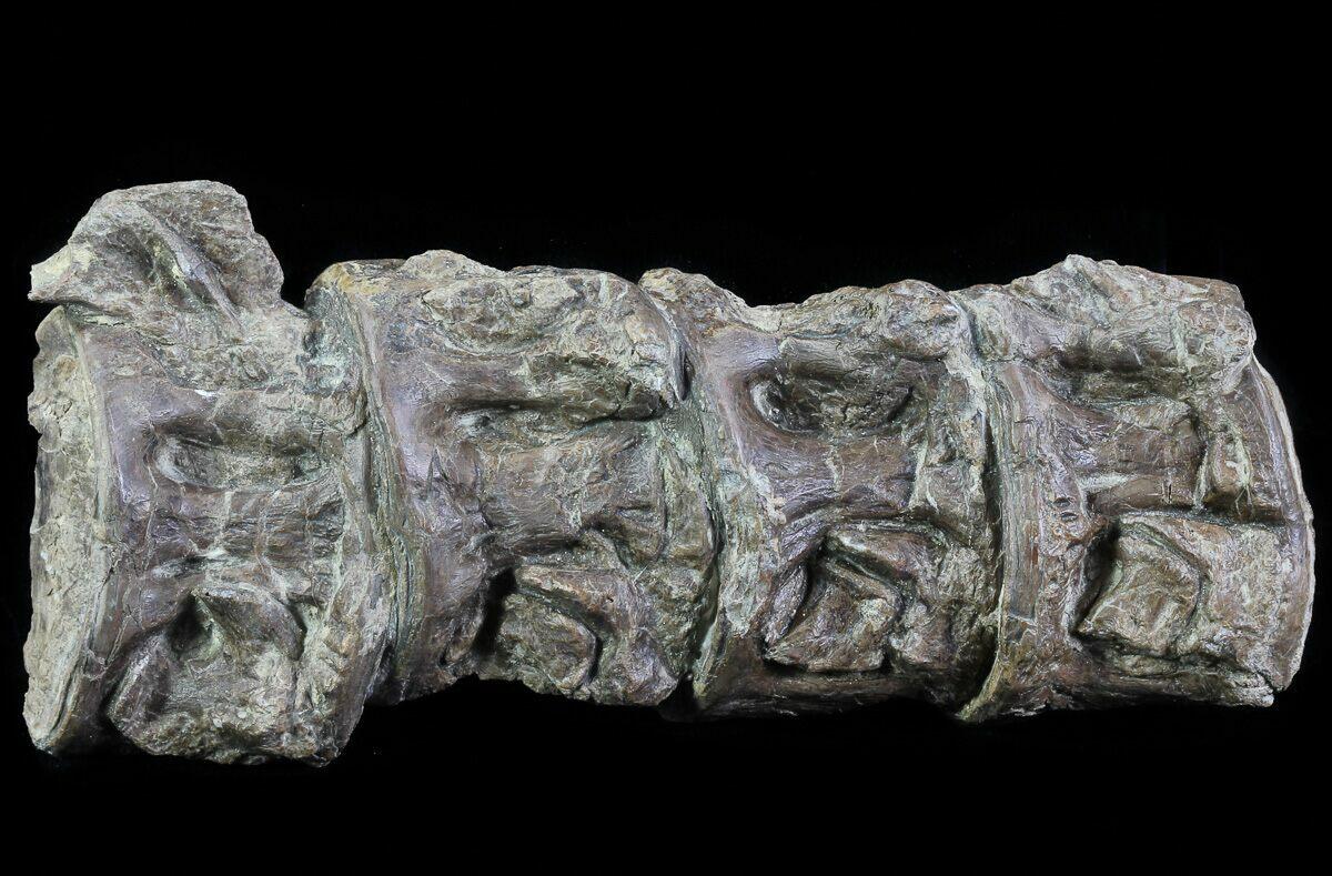 "5.9"" Four Fused Xiphactinus Vertebra - Kansas For Sale ..."