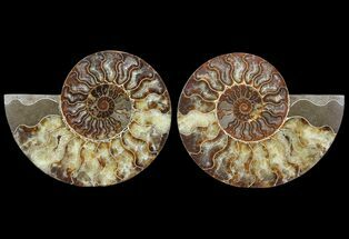 "Buy 6.3"" Cut & Polished Ammonite Pair - Agatized - #64933"