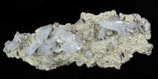 "4.4"" Blue Barite and Pyrite Association - Morocco For Sale, #64382"