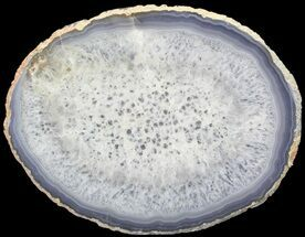 "Buy Bargain, 8.1"" Polished Brazilian Agate Slice - #68446"