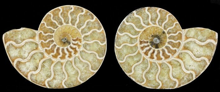 "3.2"" Polished Ammonite Pair - Agatized"