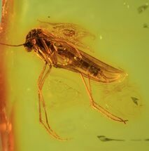 Buy Fossil Fly (Diptera) In Baltic Amber - #69301