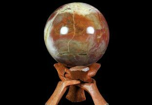 "Buy 3.8"" Colorful Petrified Wood Sphere - Madagascar - #71425"