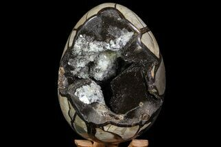 "Buy 7.5"" Septarian ""Dragon Egg"" Geode - Crystal Filled - #71845"