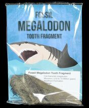 "Buy Real Fossil Megalodon Tooth Fragment - 4""+ Size - #72613"