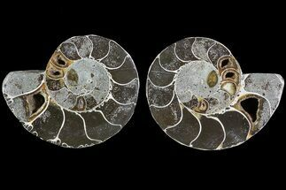 "Buy Bargain, 3.3"" Cut & Polished Ammonite Pair - Anapuzosia? - #73951"