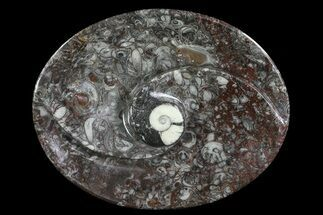 "4.6"" Oval Shaped Fossil Goniatite Dish For Sale, #73757"
