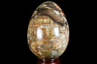 "Buy 5.2"" Colorful, Polished Petrified Wood ""Egg"" - Triassic - #74737"