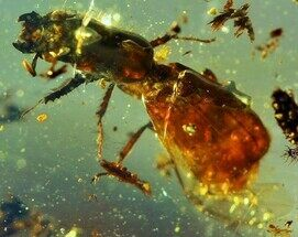 Buy Cretaceous Fossil Wasp in Amber - Myanmar - #76510