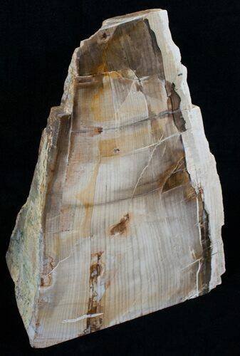 Large Free Standing Petrified Wood - Sequoia