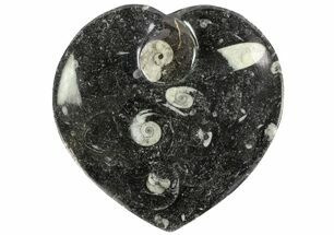 "6.5"" Heart Shaped Fossil Goniatite Dish For Sale, #77684"