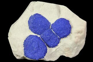 Azurite - Fossils For Sale - #77613