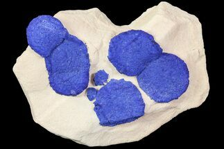 Buy Brilliant Blue Azurite Sun Cluster On Rock - Australia - #77614