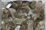 "Lot: 18 Lbs Smoky Quartz Crystals (2-4"") - Brazil - #77823-1"
