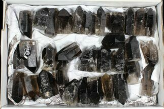 "Buy Wholesale Lot: 20 Lbs Cut base Smoky Quartz Crystals (2-4"") - Brazil - #77824"