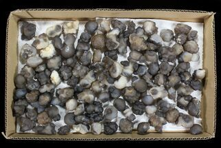 Chalcedony - Fossils For Sale - #78180