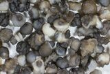 "Wholesale Lot: 2-3"" Chalcedony Nodules - 108 Pieces - #78180-4"
