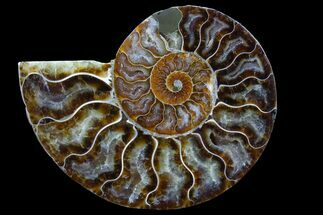 "Buy Bargain, 4.5"" Agatized Ammonite Fossil (Half) - Madagascar - #78589"