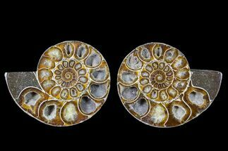 "Buy 4.6"" Cut & Polished Ammonite (Anapuzosia?) Pair - Madagascar - #78640"