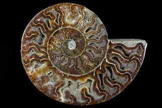 "5.3"" Agatized Ammonite Fossil (Half) - Madagascar For Sale, #79730"