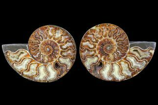 "5.4"" Cut & Polished Ammonite Pair - Agatized For Sale, #79700"