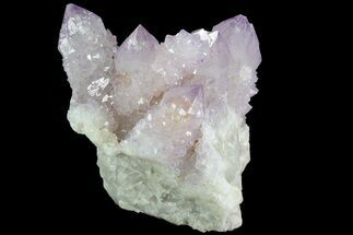 "Buy 2.3"" Cactus Quartz (Amethyst) Cluster - South Africa - #80014"