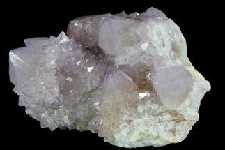 "3.2"" Cactus Quartz (Amethyst) Cluster - South Africa For Sale, #80015"