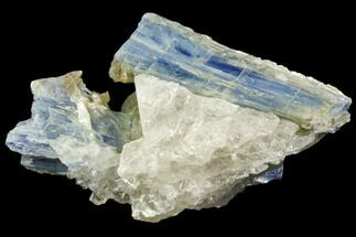 "Buy 3.6"" Vibrant Blue Kyanite Crystal In Quartz - Brazil - #80395"