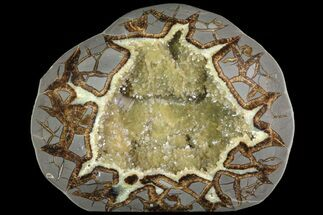 "Buy 8.1"" Beautiful, Crystal Filled Septarian Nodule - Utah - #80905"