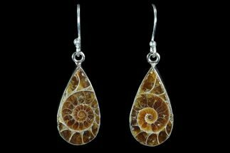 Fossil Ammonite Earrings - Sterling Silver For Sale, #81638