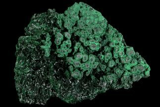"2.4"" Silky Fibrous Malachite Cluster - Congo For Sale, #81758"