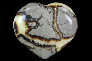 Septarian - Fossils For Sale - #82032
