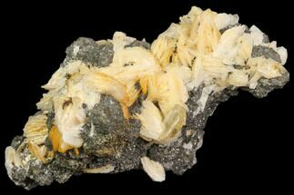 "2.7"" Cerussite Crystals with Bladed Barite on Galena - Morocco For Sale, #82349"