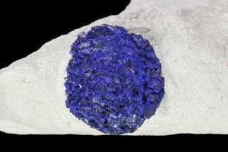 Azurite - Fossils For Sale - #82674