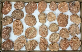 "Wholesale Flat: Desert Roses From Morocco (1.9 to 3"") - 29 Pieces For Sale, #82748"