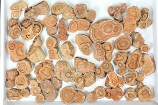 Buy Wholesale: Sandstone Concretions (Pseudo-Stromatolites) - 38 Pieces - #82762