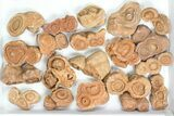 Wholesale: Sandstone Concretions (Pseudo-Stromatolites) - 38 Pieces - #82762-1