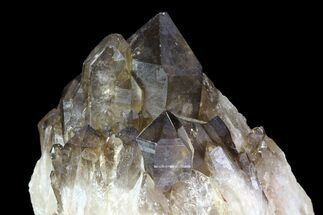 "Buy 4.1"" Smoky Quartz/Citrine Cluster - Congo - #82900"