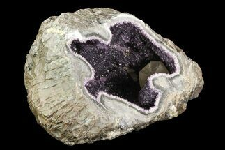 "14.5"" Purple Amethyst Geode - Uruguay For Sale, #83741"