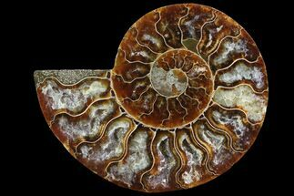 "Buy 3.8"" Agatized Ammonite Fossil (Half) - Madagascar - #83806"