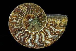 "3.2"" Agatized Ammonite Fossil (Half) - Madagascar For Sale, #83864"