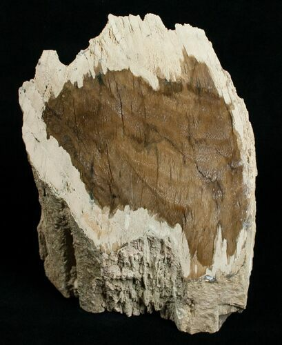 "5.8"" Tall Free-Standing Petrified Wood Specimen"