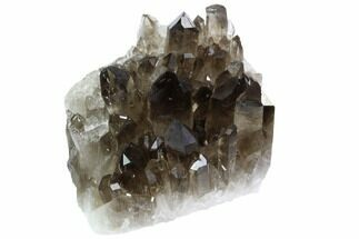 "Buy 4.1"" Dark Smoky Quartz Crystal Cluster - Brazil - #84310"