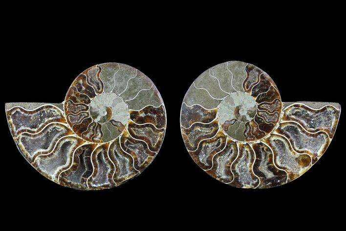 "4.35"" Cut & Polished Ammonite Fossil - Crystal Chambers"